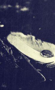 feather-erik-stine
